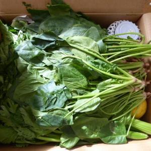 またまたお野菜をいっぱい送って貰いました。