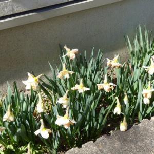 春めいてきています✿