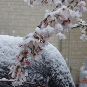 雪が降りました☃