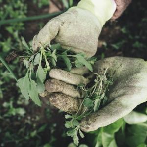 初心者による初心者向けの除草講座。1時間目:除草剤のまき方。