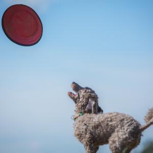 犬の気持ちを知りたい。ドッグタロット・無料モニター募集中!
