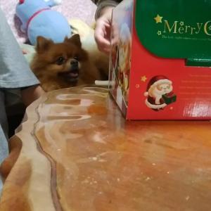 クリスマスケーキに大興奮