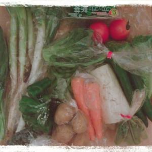 【買い物デー】野菜の高騰はいつまでつづくのか、、(´;ω;`)~節約ご飯~
