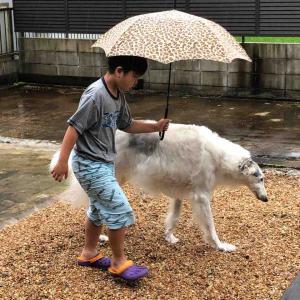 濡れないように傘さしてトイレ( ̄∀ ̄)