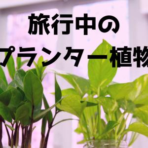 旅行中のプランター植物たち