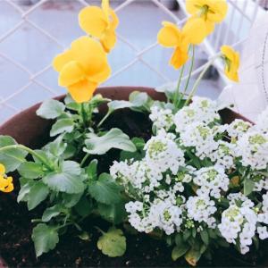 夏野菜のプランターが空いたので寄せ植えに初挑戦