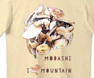 modashi