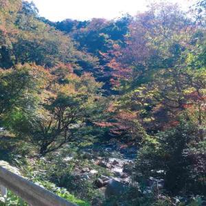 花貫渓谷で1人紅葉ハイキング!茨城散策の旅!