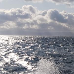 2019 フルスイング NAGE NO.20 津軽海峡マコ物語
