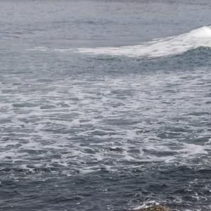 2020 フルスイング NAGE NO.5 クロガシラ戦② 残波の日本海へ