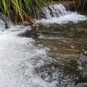 蒸し暑い夏の渓流へ イワナ釣行