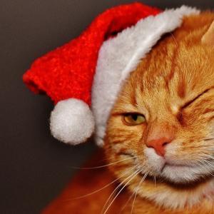 Amazonサイバーマンデーでクリスマスプレゼント購入