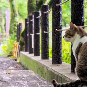 中学入試頻出作家の外山滋比古さんが死去