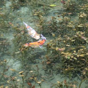関市の美しい自然  (モネの池 岩門の滝 板取川)