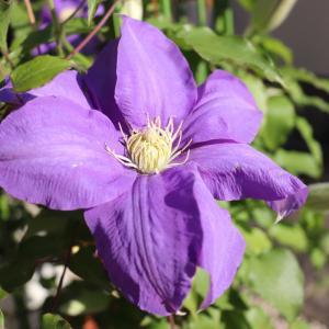 花は楽に育てて楽しみましょう。 ズボラな人でも庭がなくても大丈夫。綺麗に咲きます。《春の花》