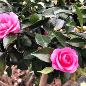 移ろいゆく季節 花や木からのメッセージ