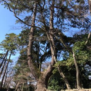 『岡崎公園』は、開運スポット満載 運が開けるかも・・・。