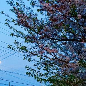 今宵は満月♡花見月見を楽しみませんか?