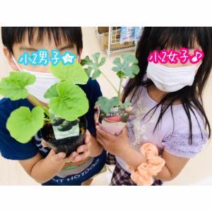 【野菜生活③】双子格差、再び!!咲かない、雌花。