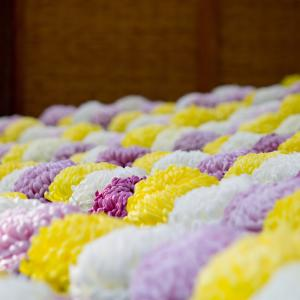 9月9日は重陽の節句♡大人のひな祭りはいかが?
