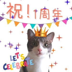 超簡単!猫用誕生日ごはんケーキを手作りしました!