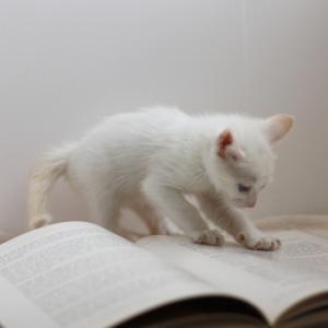 暗記と勉強と研究と。
