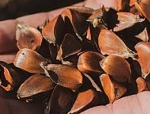 イギリスやアメリカで中国発送の謎の種子が大量に送り付けられる