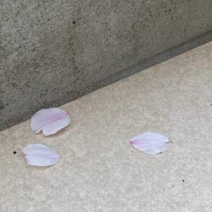 桜が散ったらしたい 賢い子どものはじめのいっぽ