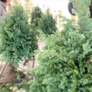 大人の花育教室にて♬大きなクリスマスツリーを手作りしました