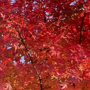 奈良の長岳寺にて紅葉