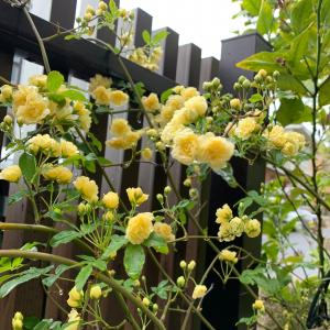 腹のお花達がお庭で元気に咲いてくれました