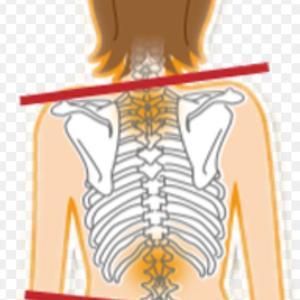 骨盤と背骨のゆがみ