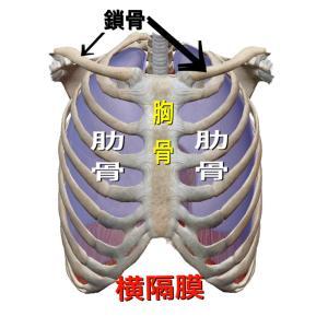 正しい呼吸をしましょう!