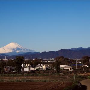 初冬の富士山(神奈川県藤沢市北部)
