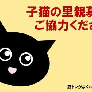 子猫の里親募集!【この件を拡散していただけると幸いです。ご協力お願いいたします】