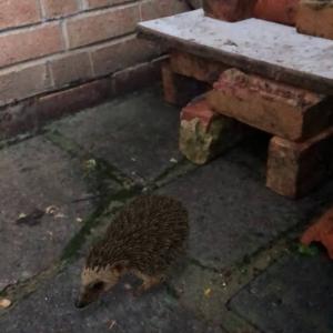 Hedgehog Houseをこさえてみた