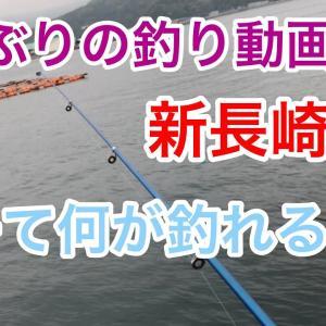 久しぶりの釣り動画 新長崎漁港