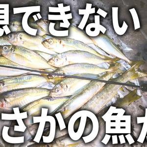 ヤバ過ぎる引き。良型アジが連発する中、まさかの魚が襲い掛かってきた!?秋の本気のライトゲーム。