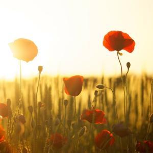 暮らしに花を一輪取り入れるだけで幸せになれる理由