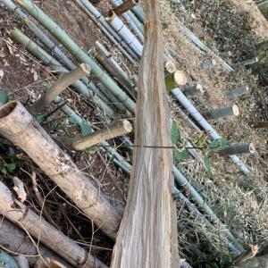 木を切るということは…