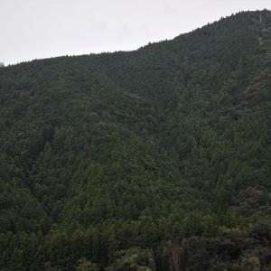 年間620億円の「森林環境税」=衆議院選挙1回分の費用!?