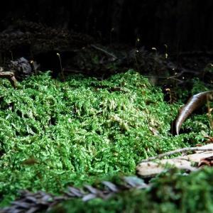 【コラム】土地は誰のもの?/自伐型林業挑戦ブログ