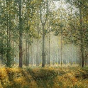 ドイツと日本 林業事情の違い