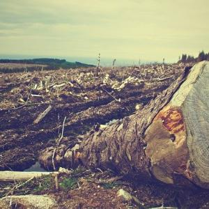 木材自給率50%を達成するとこの国は豊かになるのか?