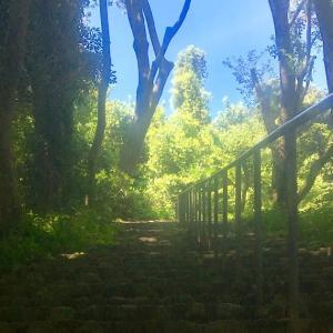 三ツ池公園トレイルでいつもの坂練習