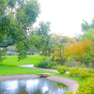 秋の佐鳴湖