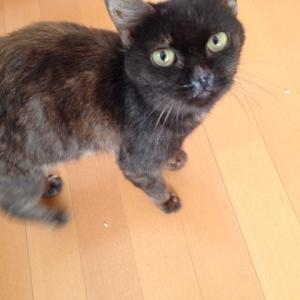 新しく猫拾いました。黒猫。