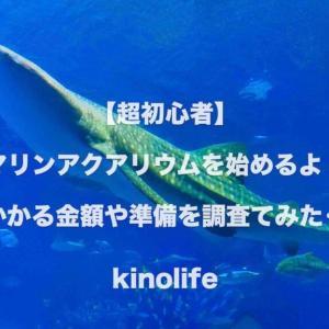 初心者が海水魚の60cm水槽立上げと飼育に挑戦!必要な機器や初期費用を調査。