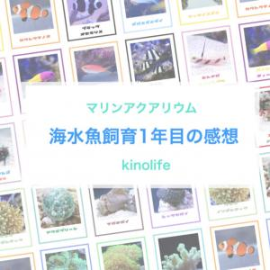 アクアリウム初心者が実際に海水魚を1年間飼育してわかったこと。