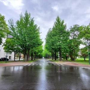 【北海道】北海道大学は立派な観光スポット